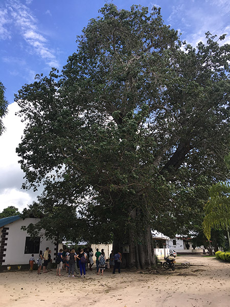 People gather under a tree.
